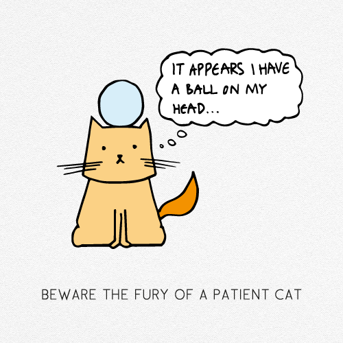 BEWARE THE FURY OF A PATIENT CAT