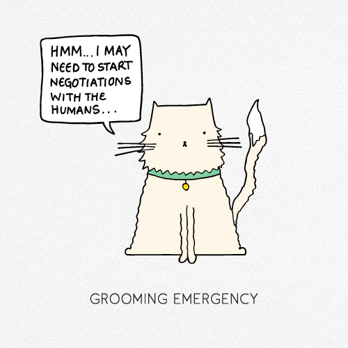 GROOMING EMERGENCY