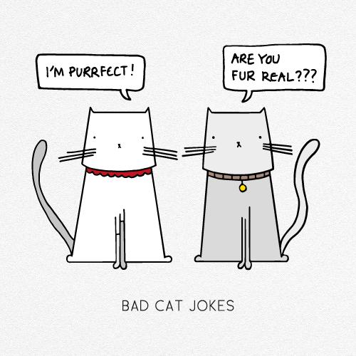 BAD CAT JOKES